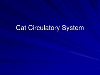 Cat Circulatory System