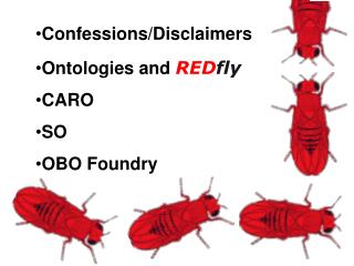 Confessions/Disclaimers Ontologies and  RED fly CARO SO OBO Foundry