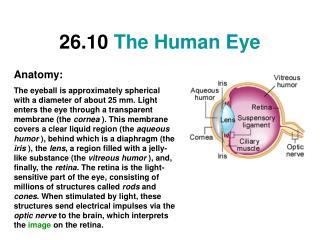 26.10 The Human Eye