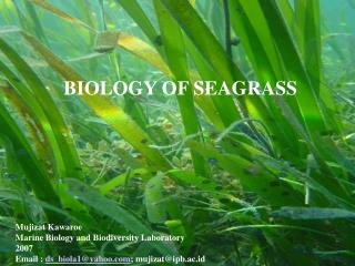 BIOLOGY OF SEAGRASS