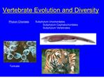 vertebrate evolution and diversity