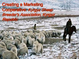 Creating a Marketing Cooperative: Kyrgyz Sheep Breeders Association, Kyrgyz Republic