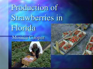 Production of Strawberries in Florida