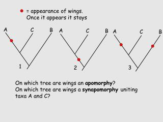 = appearance of wings. Once it appears it stays