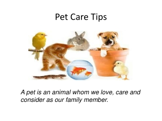 pet care tips