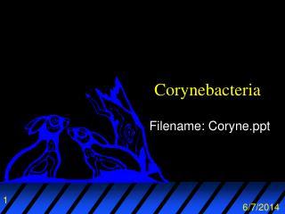 Corynebacteria