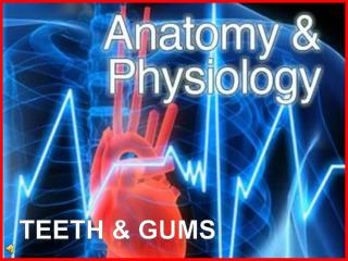 Teeth & gums
