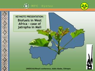 KEYNOTE PRESENTATION: Biofuels in West Africa - case of jatropha in Mali