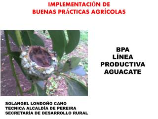 BPA LÍNEA PRODUCTIVA AGUACATE