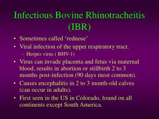 Infectious Bovine Rhinotracheitis (IBR)