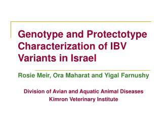 Genotype and Protectotype Characterization of IBV Variants in Israel