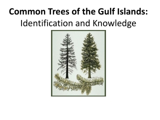 Common Trees of the Gulf Islands: Identification and Knowledge