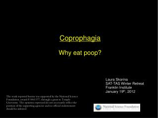 Coprophagia Why eat poop?