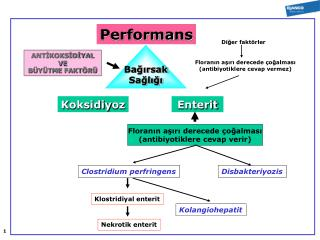 Performa ns