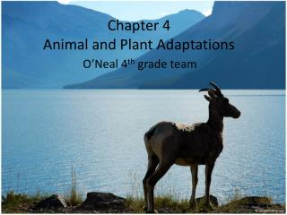 Chapter 4 Animal and Plant Adaptations