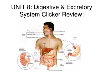 UNIT 8: Digestive & Excretory System Clicker Review!