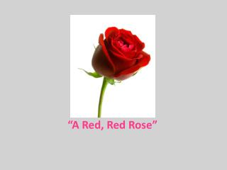 """A Red, Red Rose"""