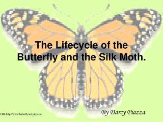 The Lifecycle of the Butterfly and the Silk Moth.