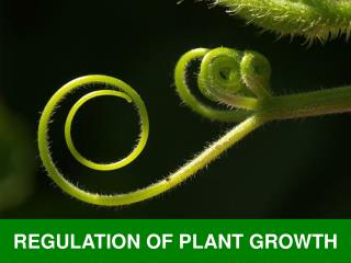 REGULATION OF PLANT GROWTH