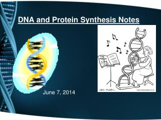 DNA and Protein Synthesis Notes