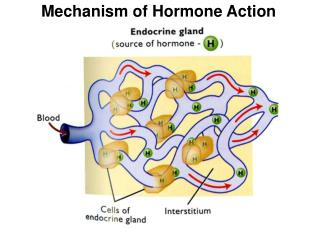Mechanism of Hormone Action