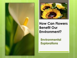 How Can Flowers Benefit Our Environment?