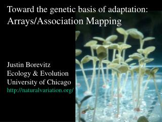Toward the genetic basis of adaptation:  Arrays/Association Mapping Justin Borevitz Ecology & Evolution University of Ch