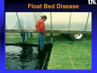 Float Bed Disease