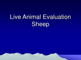 Live Animal Evaluation Sheep