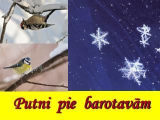 Putni pie barotavām