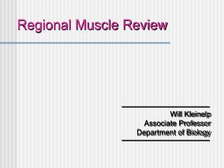 Regional Muscle Review