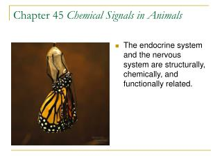 Chapter 45 Chemical Signals in Animals