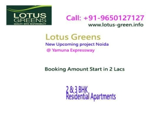 Lotus greens price list
