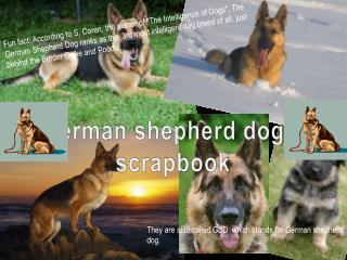 German shepherd dogs' scrapbook