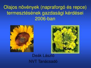Olajos növények (napraforgó és repce) termesztésének gazdasági kérdései 2006-ban
