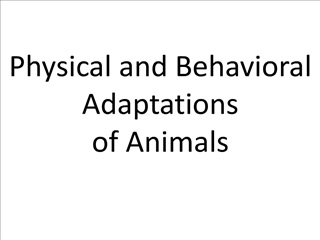 physical and behavioral adaptations of animals