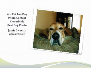 4-H Pet Fun Day Photo Contest Cloverbuds  Best Dog Photo