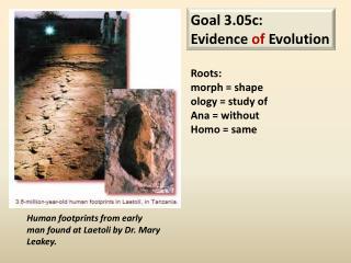 Goal 3.05c: Evidence of Evolution