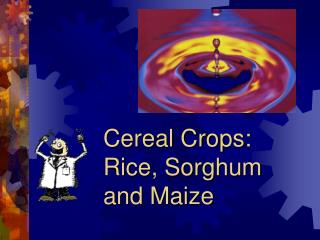 Cereal Crops:  Rice, Sorghum  and Maize