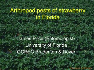 Arthropod pests of strawberry in Florida
