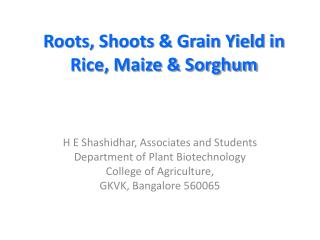 Roots, Shoots & Grain Yield in Rice, Maize & Sorghum