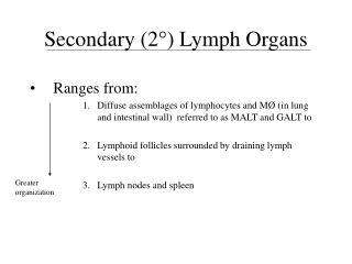Secondary (2 °) Lymph Organs