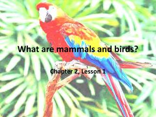 What are mammals and birds?