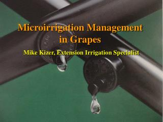 Microirrigation Management in Grapes Mike Kizer, Extension Irrigation Specialist