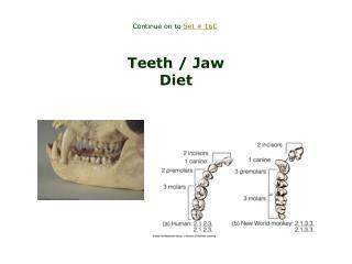 Teeth / Jaw Diet