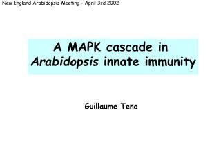 A MAPK cascade in Arabidopsis innate immunity