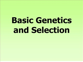 basic genetics  and selection