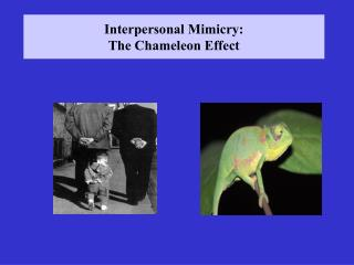 Interpersonal Mimicry: The Chameleon Effect