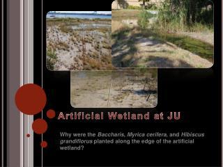 Artificial Wetland at JU