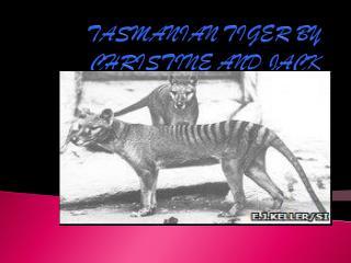 TASMANIAN TIGER BY CHRISTINE AND JACK
